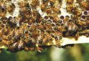 Paramos teikimas bičių laikytojams 2019 metais