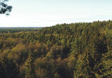 Miškų vaidmuo, švelninant klimato kaitą, – gyvybiškai svarbus